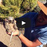 Patagonia Ranch Tour